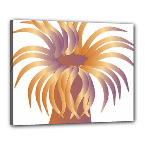 Sea Anemone Canvas 20  X 16  by Mariart