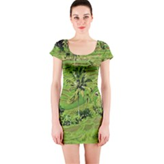 Greenery Paddy Fields Rice Crops Short Sleeve Bodycon Dress by Nexatart