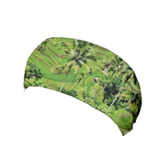 Greenery Paddy Fields Rice Crops Yoga Headband by Nexatart