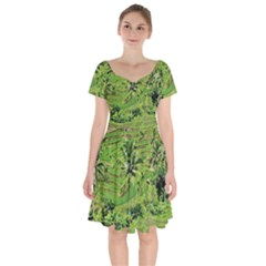Greenery Paddy Fields Rice Crops Short Sleeve Bardot Dress by Nexatart