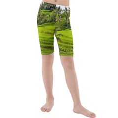 Rice Terrace Terraces Kids  Mid Length Swim Shorts by Nexatart