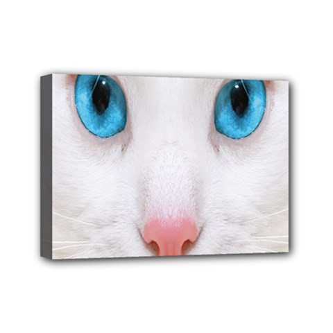 Beautiful White Face Cat Animals Blue Eye Mini Canvas 7  X 5  by Mariart