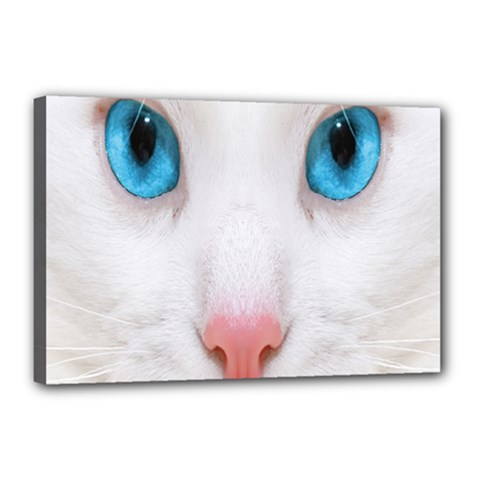 Beautiful White Face Cat Animals Blue Eye Canvas 18  X 12  by Mariart