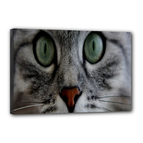 Cat Face Eyes Gray Fluffy Cute Animals Canvas 18  X 12  by Mariart