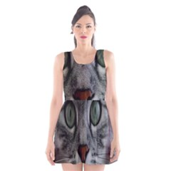 Cat Face Eyes Gray Fluffy Cute Animals Scoop Neck Skater Dress