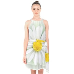Art Daisy Flower Art Flower Deco Halter Collar Waist Tie Chiffon Dress