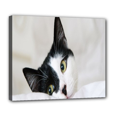 Cat Face Cute Black White Animals Deluxe Canvas 24  X 20   by Mariart