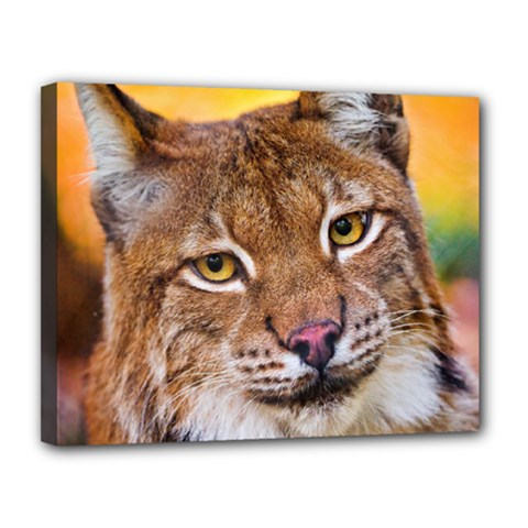 Tiger Beetle Lion Tiger Animals Canvas 14  X 11  by Mariart