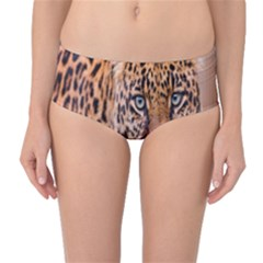 Tiger Beetle Lion Tiger Animals Leopard Mid Waist Bikini Bottoms by Mariart