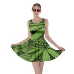 Marijuana Plants Pattern Skater Dress by dflcprints