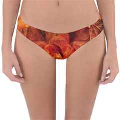 Ablaze With Beautiful Fractal Fall Colors Reversible Hipster Bikini Bottoms by jayaprime