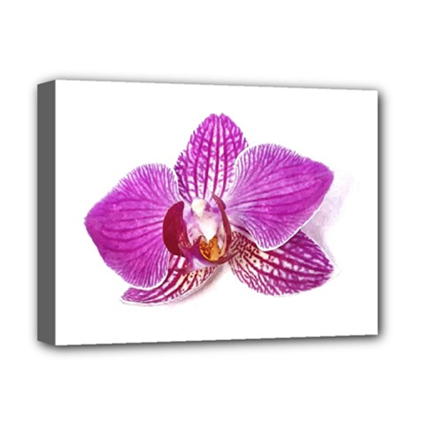 Lilac Phalaenopsis Aquarel  Watercolor Art Painting Deluxe Canvas 16  X 12   by picsaspassion