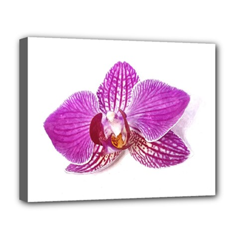 Lilac Phalaenopsis Aquarel  Watercolor Art Painting Deluxe Canvas 20  X 16   by picsaspassion