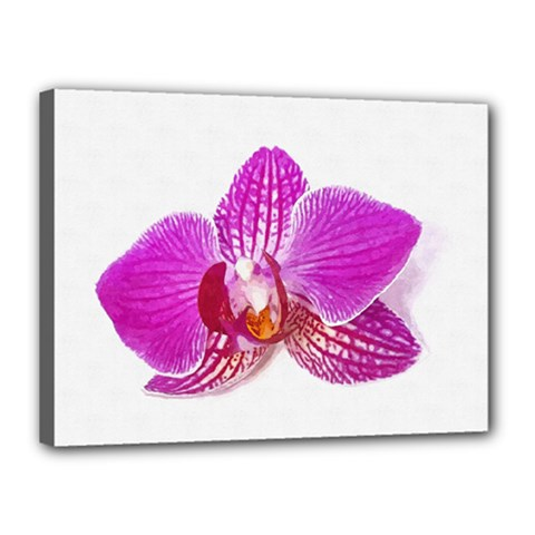 Lilac Phalaenopsis Flower, Floral Oil Painting Art Canvas 16  X 12  by picsaspassion