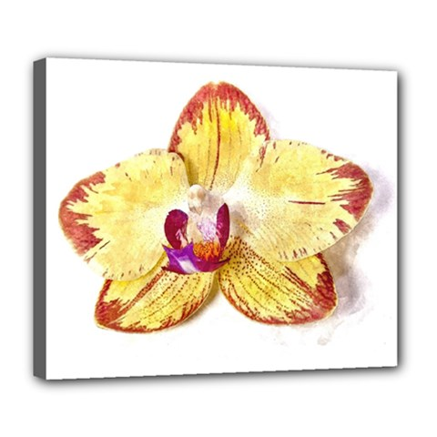 Yellow Phalaenopsis Flower, Floral Aquarel Watercolor Painting Art Deluxe Canvas 24  X 20   by picsaspassion