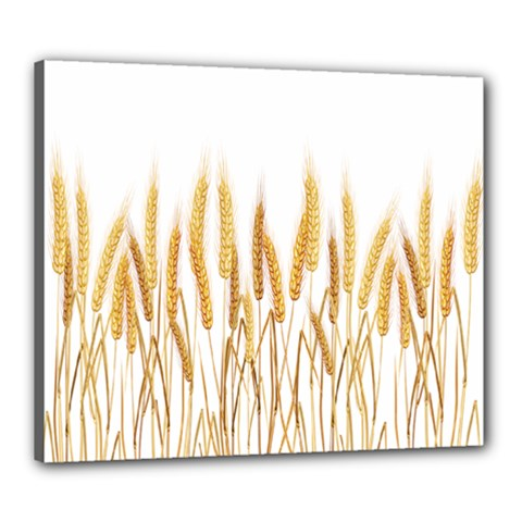 Wheat Plants Canvas 24  X 20  by Mariart