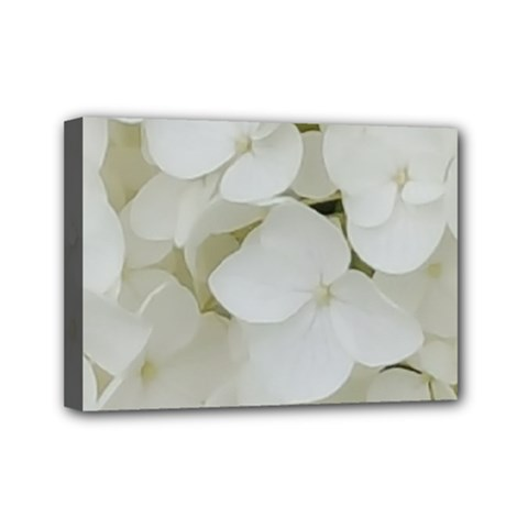 Hydrangea Flowers Blossom White Floral Elegant Bridal Chic Mini Canvas 7  X 5  by yoursparklingshop
