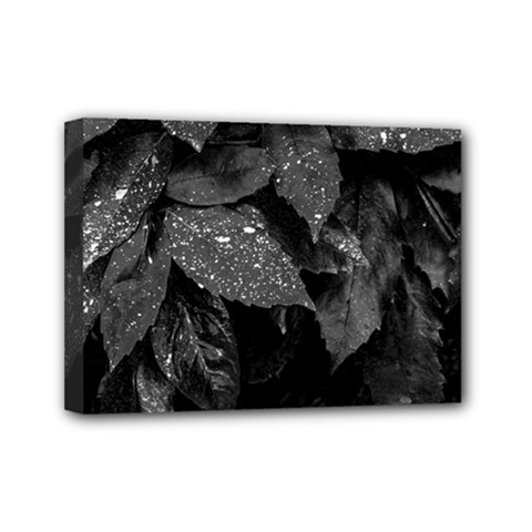 Black And White Leaves Photo Mini Canvas 7  X 5  by dflcprintsclothing