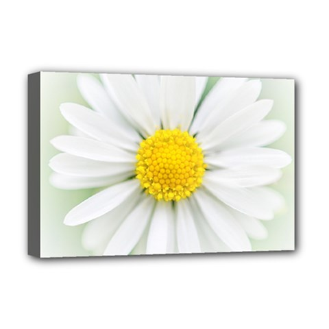 Art Daisy Flower Art Flower Deco Deluxe Canvas 18  X 12   by Celenk