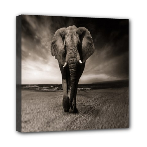 Elephant Black And White Animal Mini Canvas 8  X 8  by Celenk