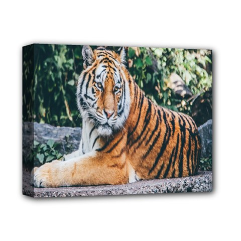 Animal Big Cat Safari Tiger Deluxe Canvas 14  X 11  by Celenk