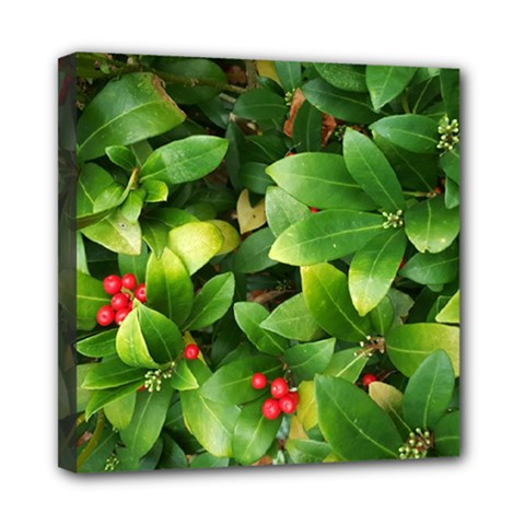 Christmas Season Floral Green Red Skimmia Flower Mini Canvas 8  X 8  by yoursparklingshop
