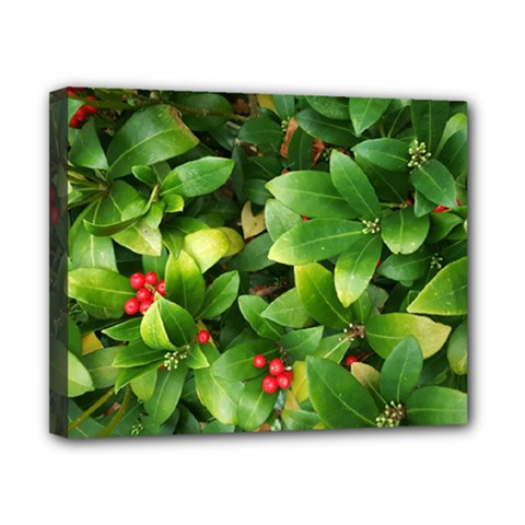 Christmas Season Floral Green Red Skimmia Flower Canvas 10  X 8
