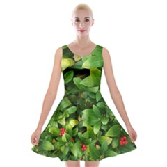 Christmas Season Floral Green Red Skimmia Flower Velvet Skater Dress by yoursparklingshop