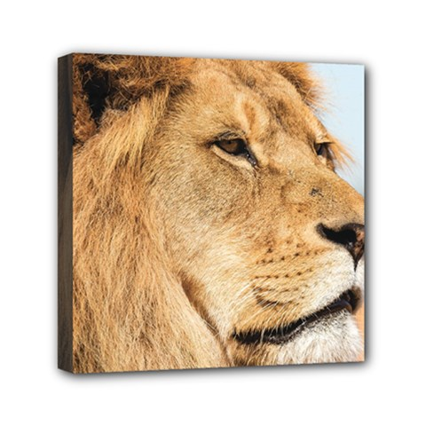 Big Male Lion Looking Right Mini Canvas 6  X 6