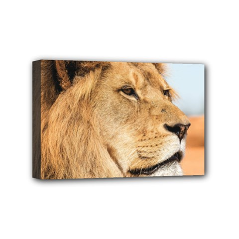 Big Male Lion Looking Right Mini Canvas 6  X 4  by Ucco