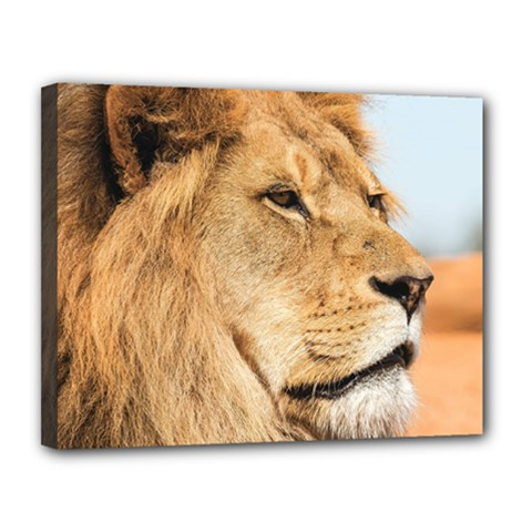 Big Male Lion Looking Right Canvas 14  X 11