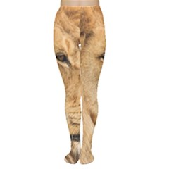 Big Male Lion Looking Right Women s Tights by Ucco