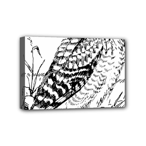Animal Bird Forest Nature Owl Mini Canvas 6  X 4  by Celenk