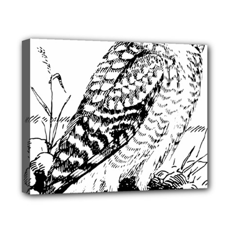 Animal Bird Forest Nature Owl Canvas 10  X 8  by Celenk