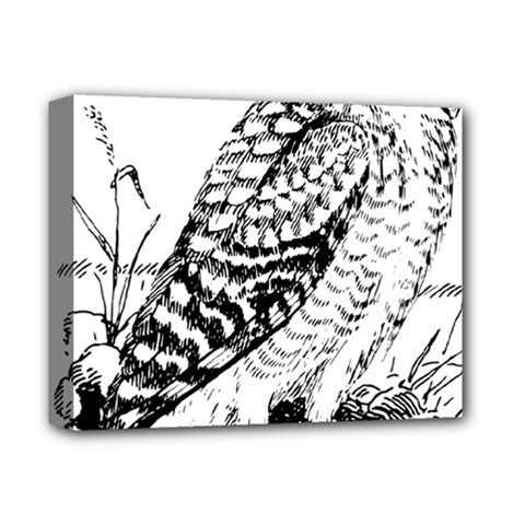 Animal Bird Forest Nature Owl Deluxe Canvas 14  X 11  by Celenk