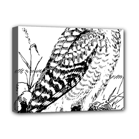 Animal Bird Forest Nature Owl Deluxe Canvas 16  X 12   by Celenk