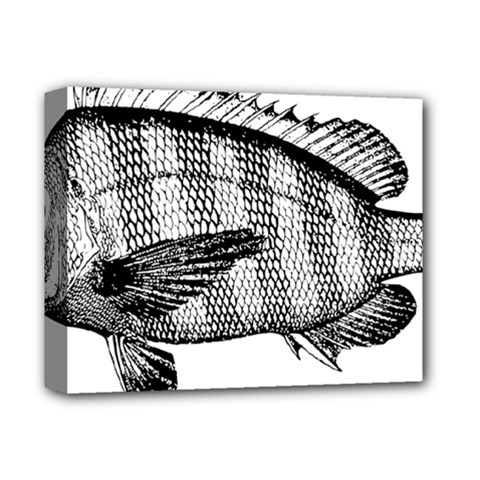 Animal Fish Ocean Sea Deluxe Canvas 14  X 11  by Celenk