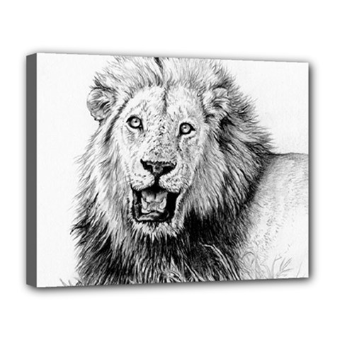 Lion Wildlife Art And Illustration Pencil Canvas 14  X 11