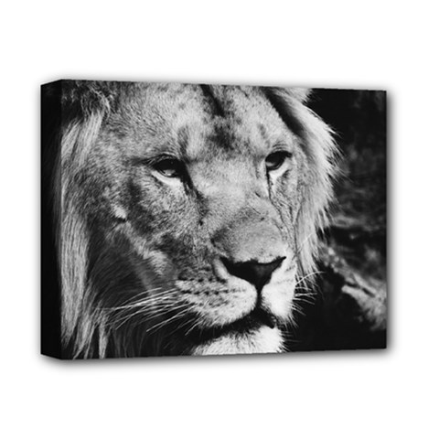 Africa Lion Male Closeup Macro Deluxe Canvas 14  X 11