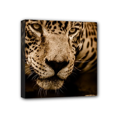 Jaguar Water Stalking Eyes Mini Canvas 4  X 4