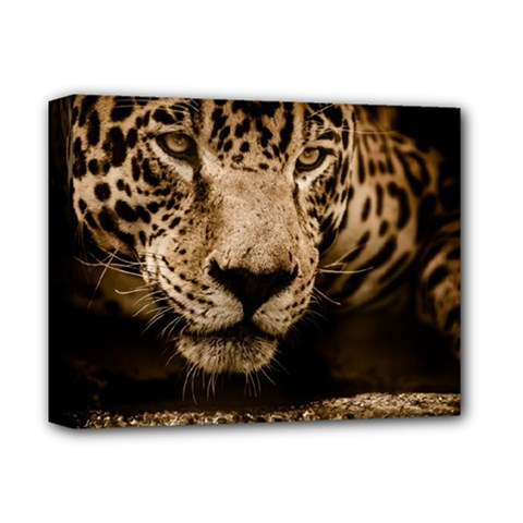 Jaguar Water Stalking Eyes Deluxe Canvas 14  X 11