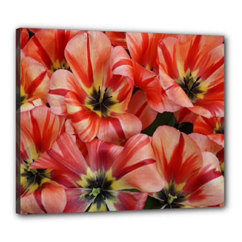 Tulips Flowers Spring Canvas 24  X 20