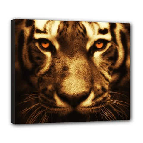 Cat Tiger Animal Wildlife Wild Deluxe Canvas 24  X 20   by Celenk
