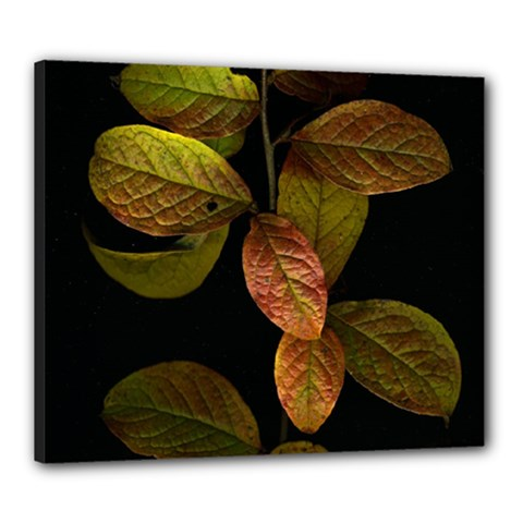 Autumn Leaves Foliage Canvas 24  X 20  by Celenk