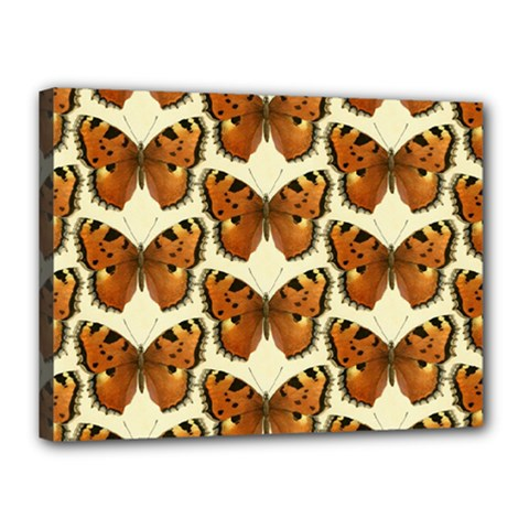 Butterfly Butterflies Insects Canvas 16  X 12