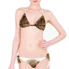 Lion Cub Close Cute Eyes Lookout Bikini Set