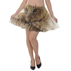 Lion Cub Close Cute Eyes Lookout Velvet Skater Skirt