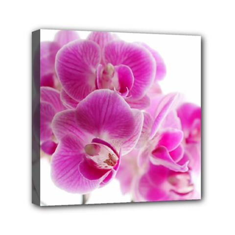 Orchid Phaleonopsis Art Plant Canvas Travel Bag by Celenk