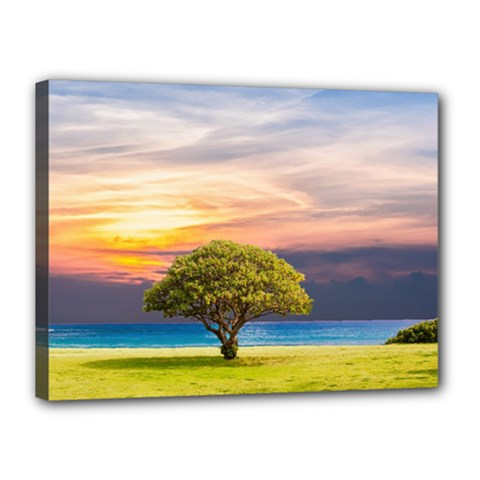 Tree Sea Grass Nature Ocean Canvas 16  X 12  by Celenk