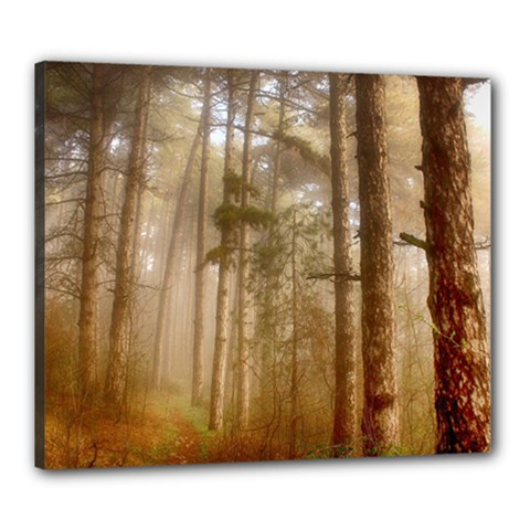 Forest Trees Wood Branc Canvas 24  X 20